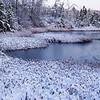 Dawn at Ponemah Bog, Amherst NH