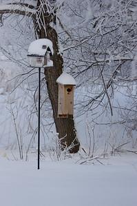 20110222_Backyard_Winter_Snow_083