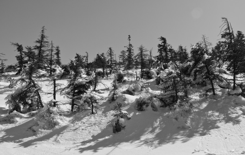 Jagged Shadows<br /> near the summit of Mt. Kearsarge Winslow State Park,  NH - that ice kept falling all the way up and down and beaned me more than a few times.  B&W brings up the drama and shapes.
