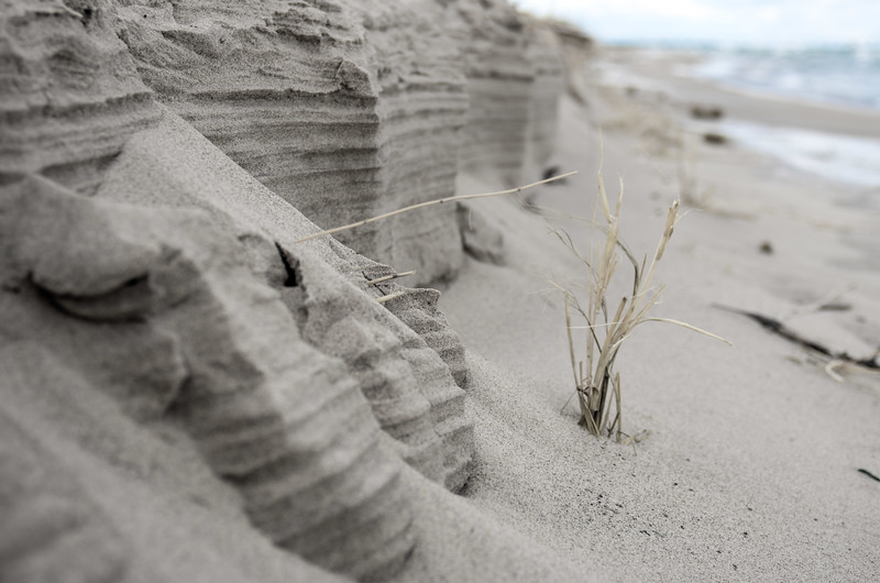 Cliffs of St. Joe with a massive dune tree and the sea