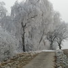 Frozen Trees (5)