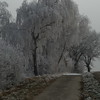 Frozen Trees (6)