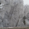 Frozen Trees (10)