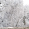 Frozen Trees (12)