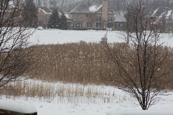 Winter Washtenaw 2013