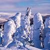 99  G Snowy Trees
