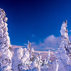 90  G Snowy Trees