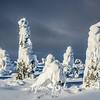 88  G Snowy Trees