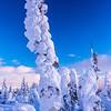 93  G Snowy Trees V