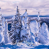 98  G Snowy Trees