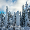 41  G Snowy Trees