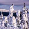 102  G Snowy Trees