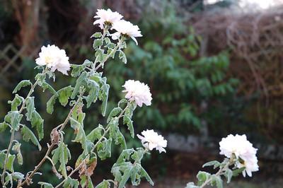 Winter in the garden 12/12/12