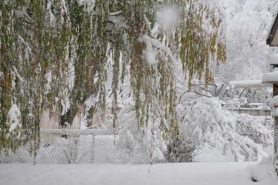 Snow, beautiful snow