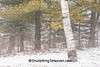 April Snowstorm, Dane County, Wisconsin
