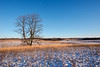 Winter on a Oak-Savanna prairie
