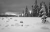 snowscape-3838