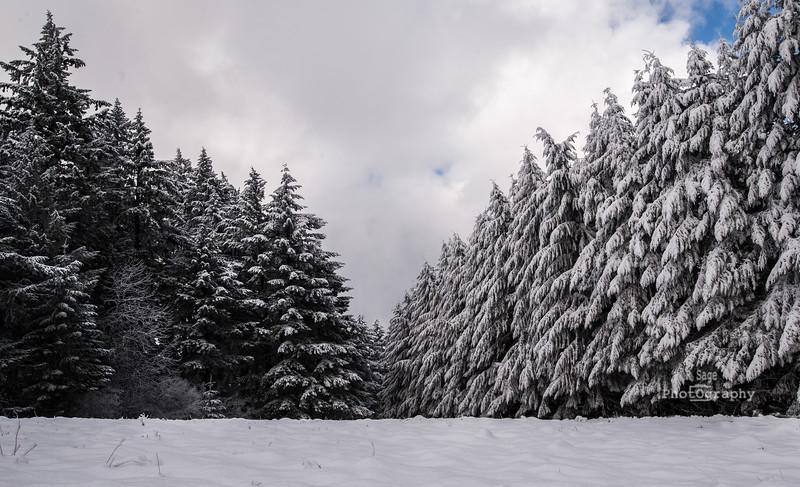 winter wonderland-6874
