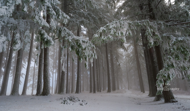 winter forest-6638