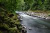 nestucca river-3376