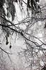 winter 2012 DSC_0322