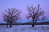 Oak Savannah Prairie at twilight