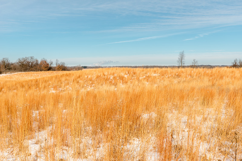 Big Bluestem grasses in February