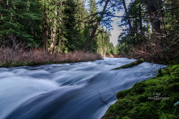 mcKenzie river-8640