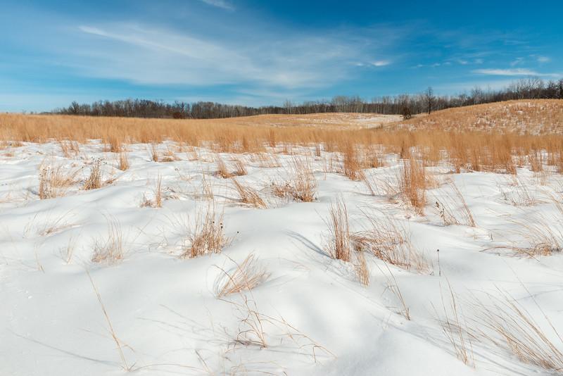 Big Bluestem grasses in winter
