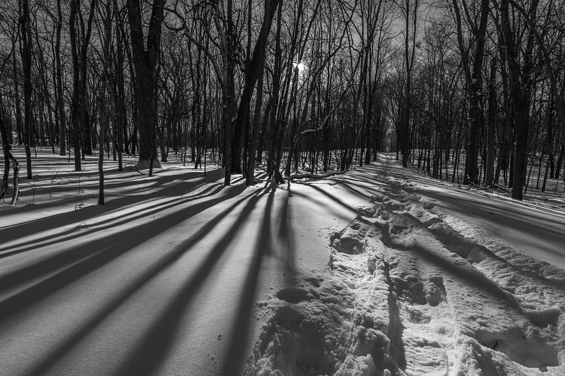 Shadows and snowshoe trail
