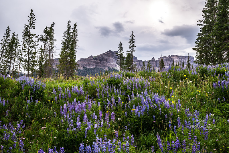 pinnacles & lupine-3307