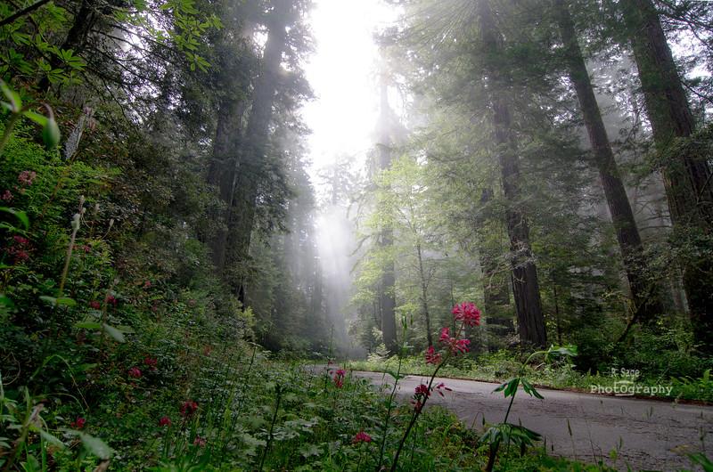 redwood road-2852