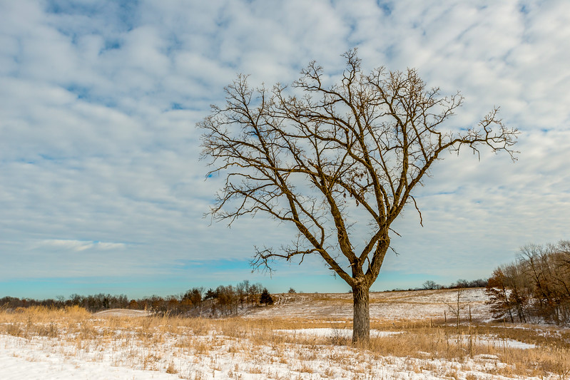 Naked tree on the prairie