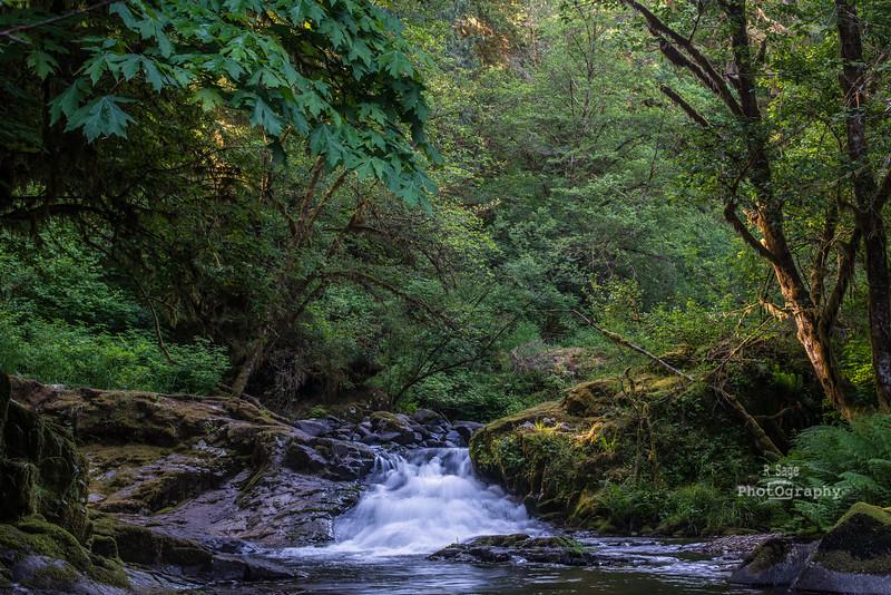 sweet creek little falls-9424
