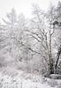 winter tree-5282