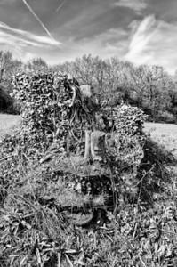 Old Tree Stump in Grove Park