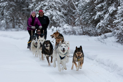 Dogsledding near Canmore Alberta