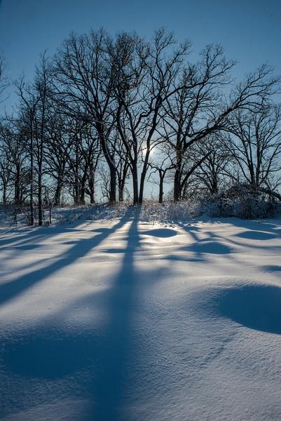 Shadows on a fresh snow