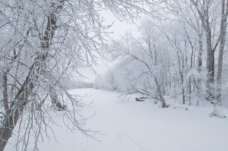 MNWN-10046: Elm Creek in hoar frost