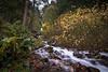 wahkeena falls-6259