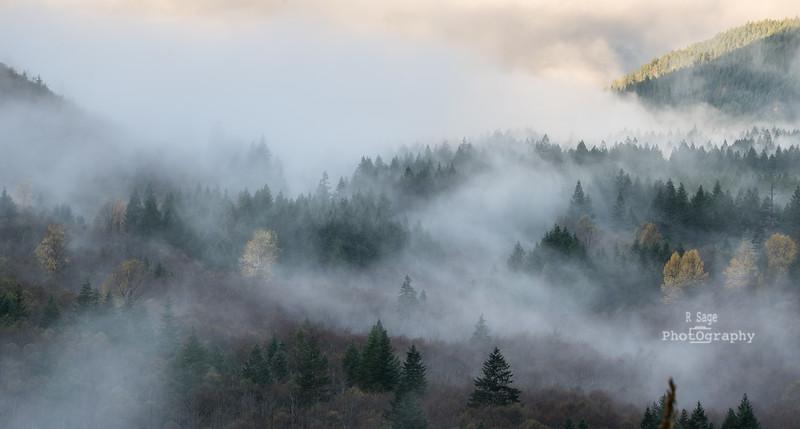 Fog & Trees-3658