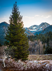 wlc tibble fork 111817242017-Edit
