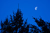 Evergreens and Half Moon, Sauk County, Wisconsin