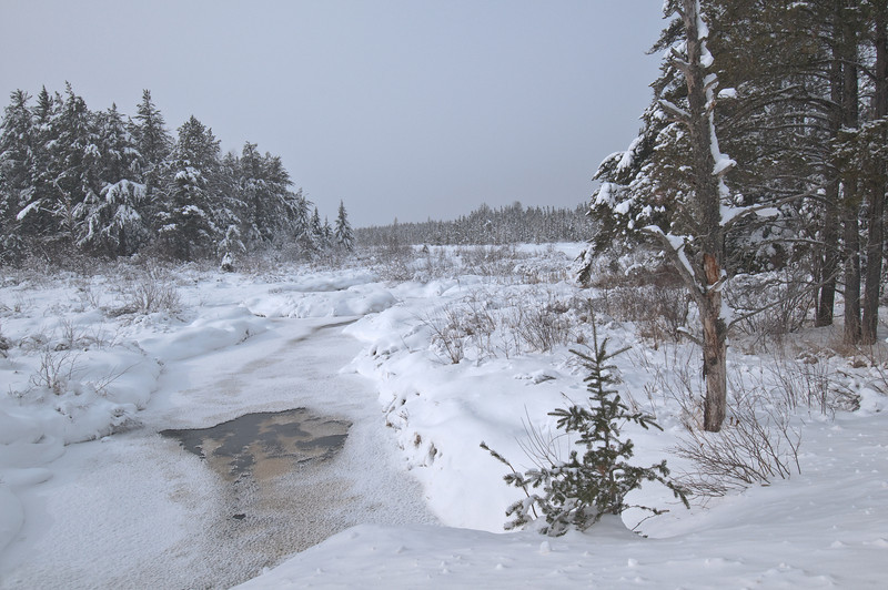 MNWN-10033: Sand Creek in Superior National forest