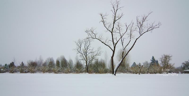 winter tree-0387
