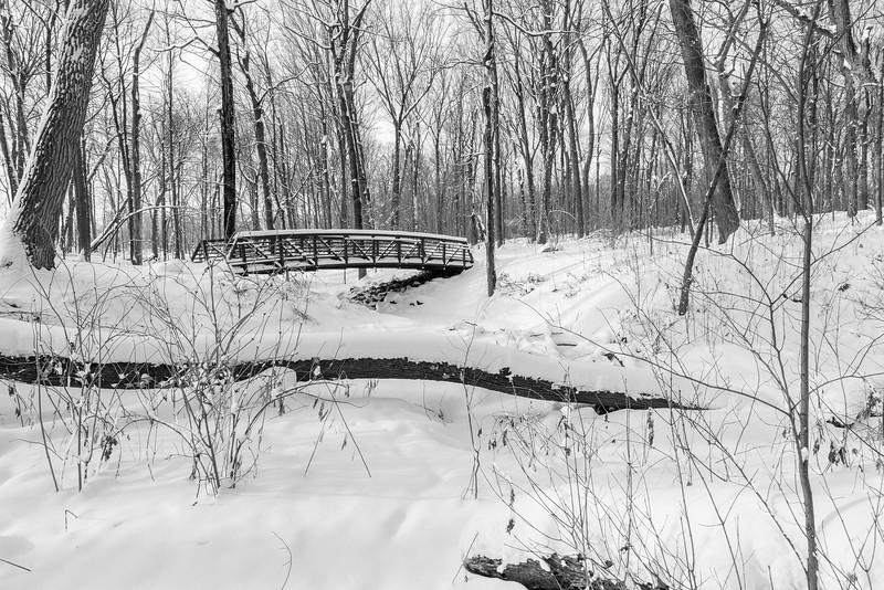 Henry's Woods in B & W