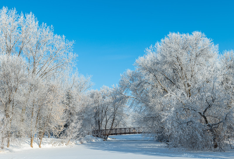 Hoar Frost at Elm Creek