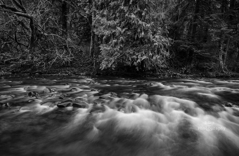 salmon river rapids b&w-8003
