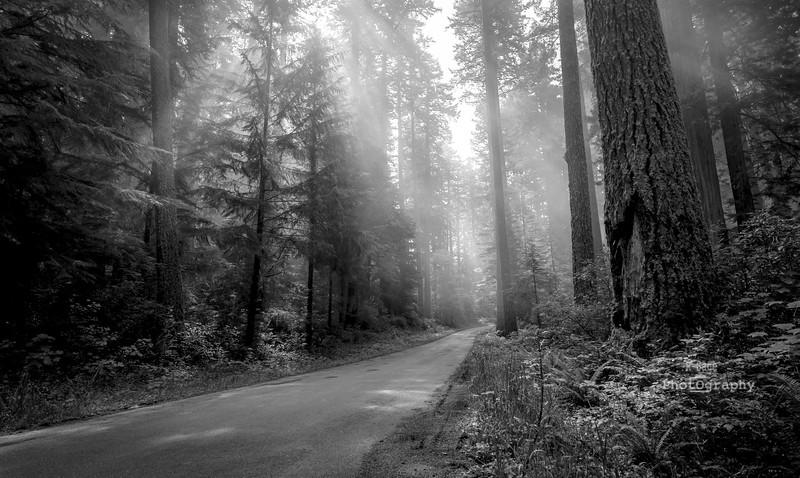 redwood sunbeams 2-2886