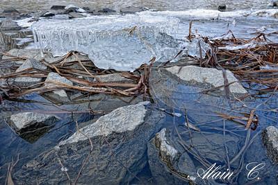 Printemps dans le ruisseau